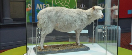 Dolly the Sheep exhibit at National Museum of Scotland