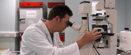 Working in lab at microscope