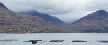 A Scottish fish farm - credit the Roslin Institute